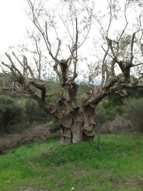 finikounda-chamaloni-nature