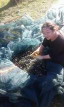 tradition-olive-harvest-messinia