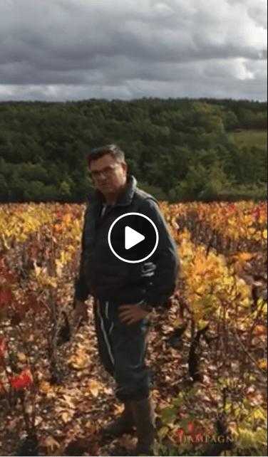 Taille des pieds de vigne