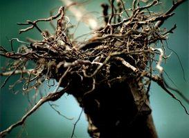 Les facteurs pouvant influencer la mycorhization en vigne