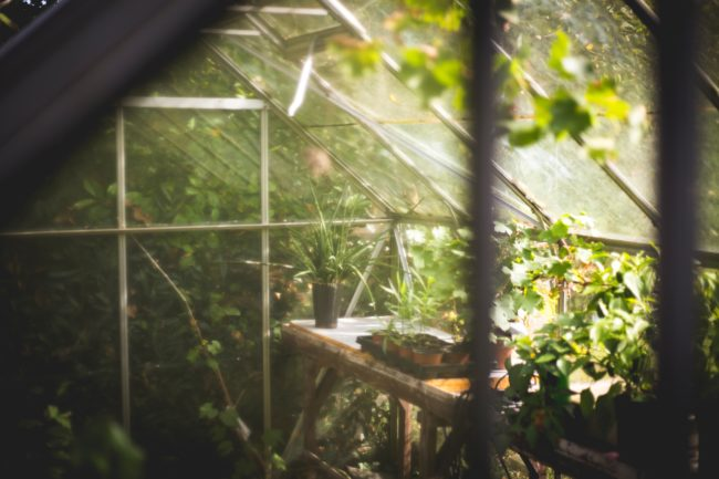 Protecting Your Plants From Heavy Rain