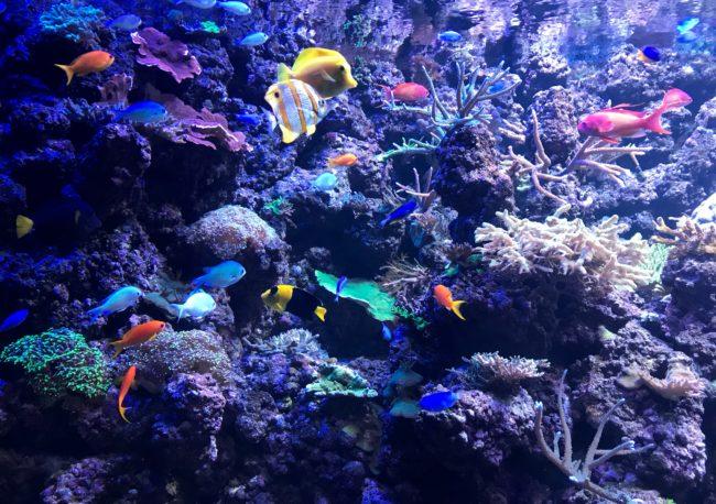 fish at the deep Hull