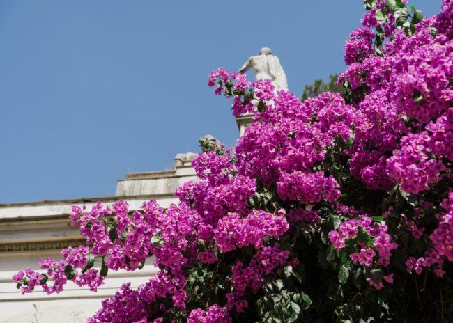 rome, italy, flowers