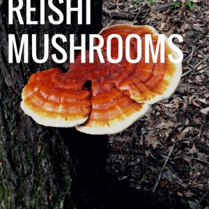 Health Benfits of Reishi Mushrooms