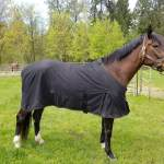 Champion Horse Blankets Home