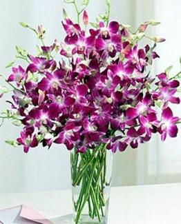 8 purple orchids bouquet CF