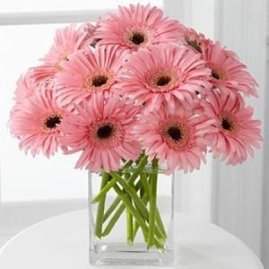 CF Pink Gerberas Bouquet