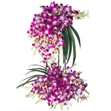 CF Amazing Orchids