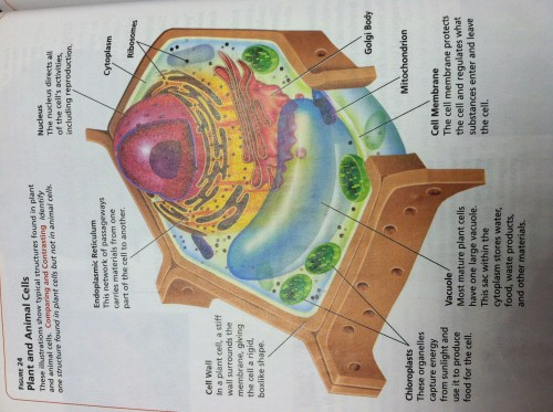 small resolution of animal and plant cell diagram 3d 3d plant cell diagram