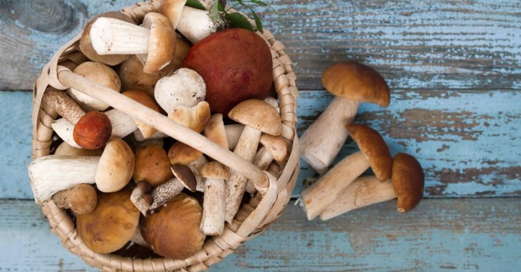 Mushrooms 101 !
