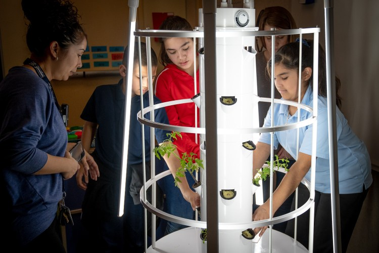 A vertical school garden. One of more than 10 ideas that teams can start as part of the Arizona Sustainability Challenge