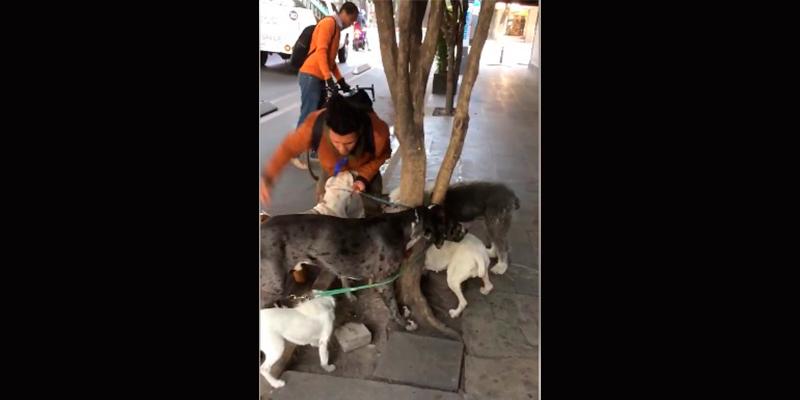 cuidador-de-perros-la-condesa-maltrato-animal