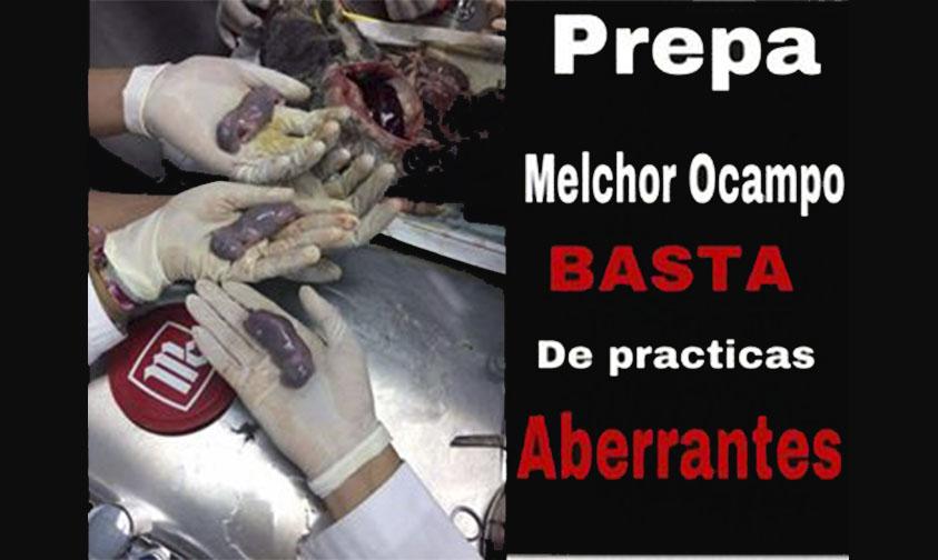 #UMSNH Denuncian Sacrificio De Conejita Preñada En La Prepa Melchor