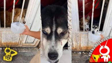#Denúnciamesta Perritos llevan meses abandonados y encerrados, ya están enfermos
