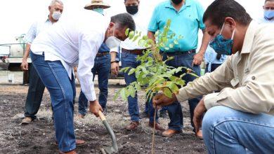Photo of Arranca Campaña De Reforestación 2020 En Apatzingán