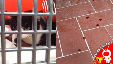 Photo of #Denúnciamesta Violan a gatita en pleno centro, buscan a su agresor