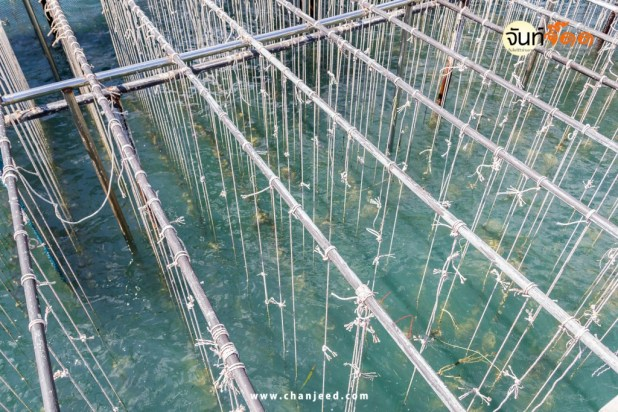 The coop for feeding shellfish in east of Thailand sea.