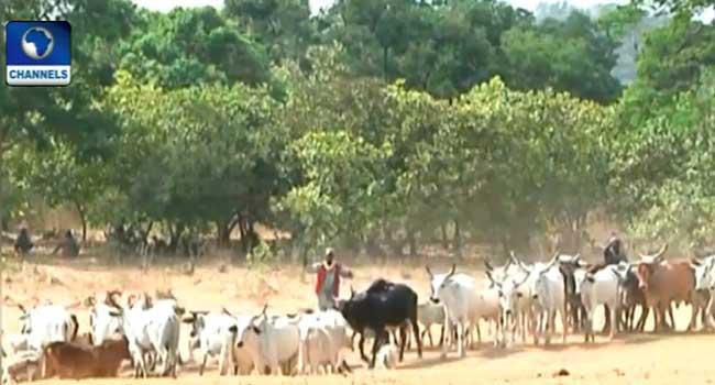 Kwara Govt Bans Night Cattle Grazing