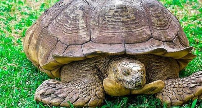 344-Year-Old Tortoise Dies In Ogbomoso 1