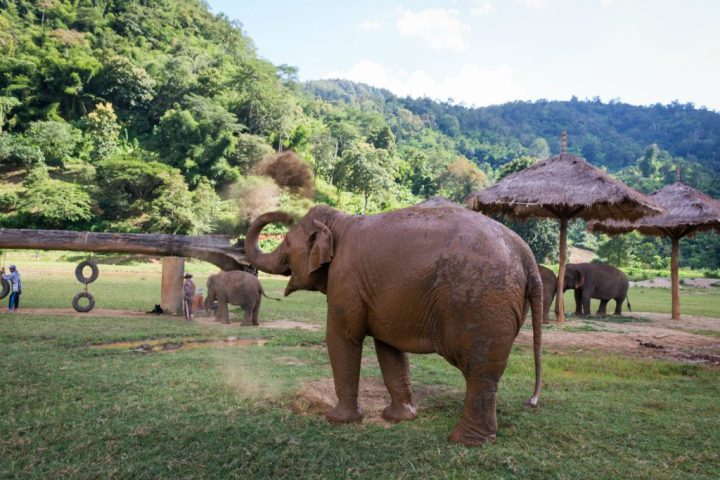 ElephantNatureParkDirtBath2