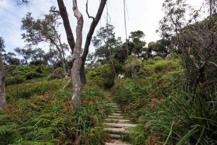 Hiking in Jervis Bay, New South Wales - a weekend escape from Sydney.
