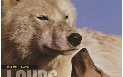 Face au loups