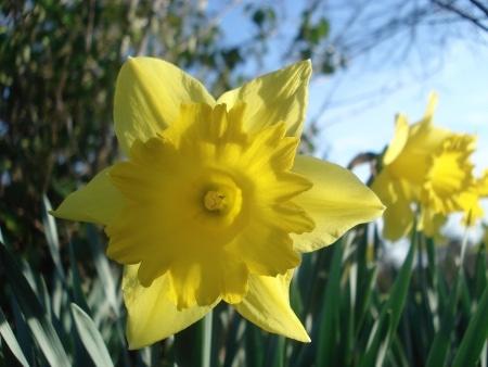 Verset pour la Dame de printemps