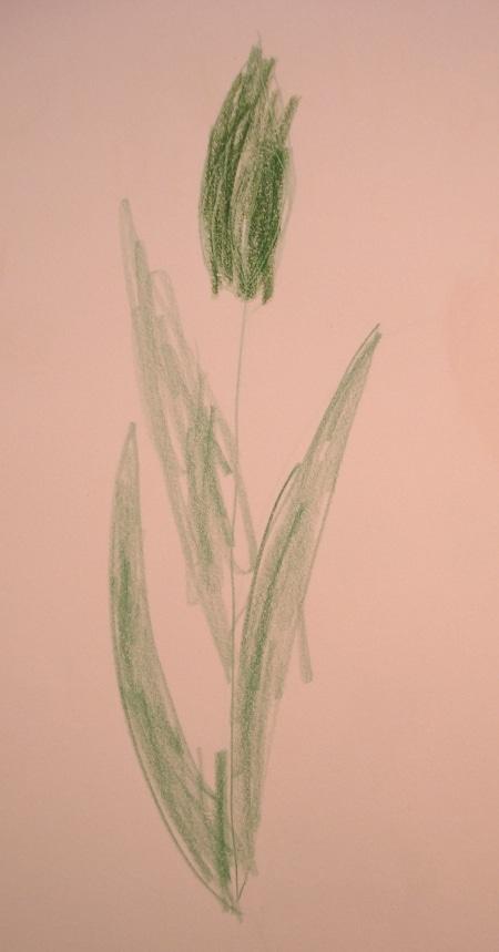 L'herbier de la princesse Violette