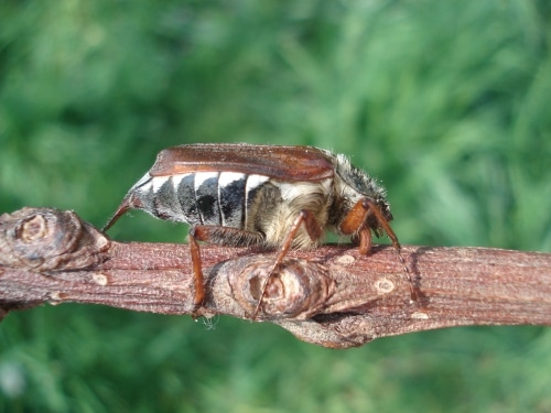 identification des insectes