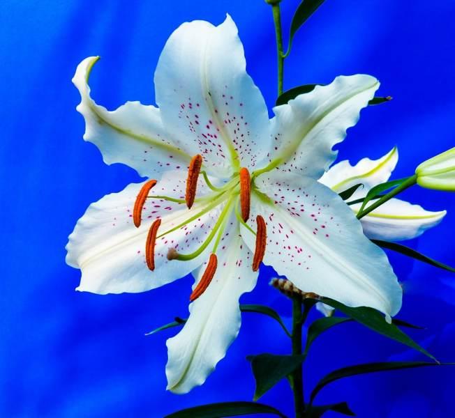 arbre qui rêvait d'une fleur