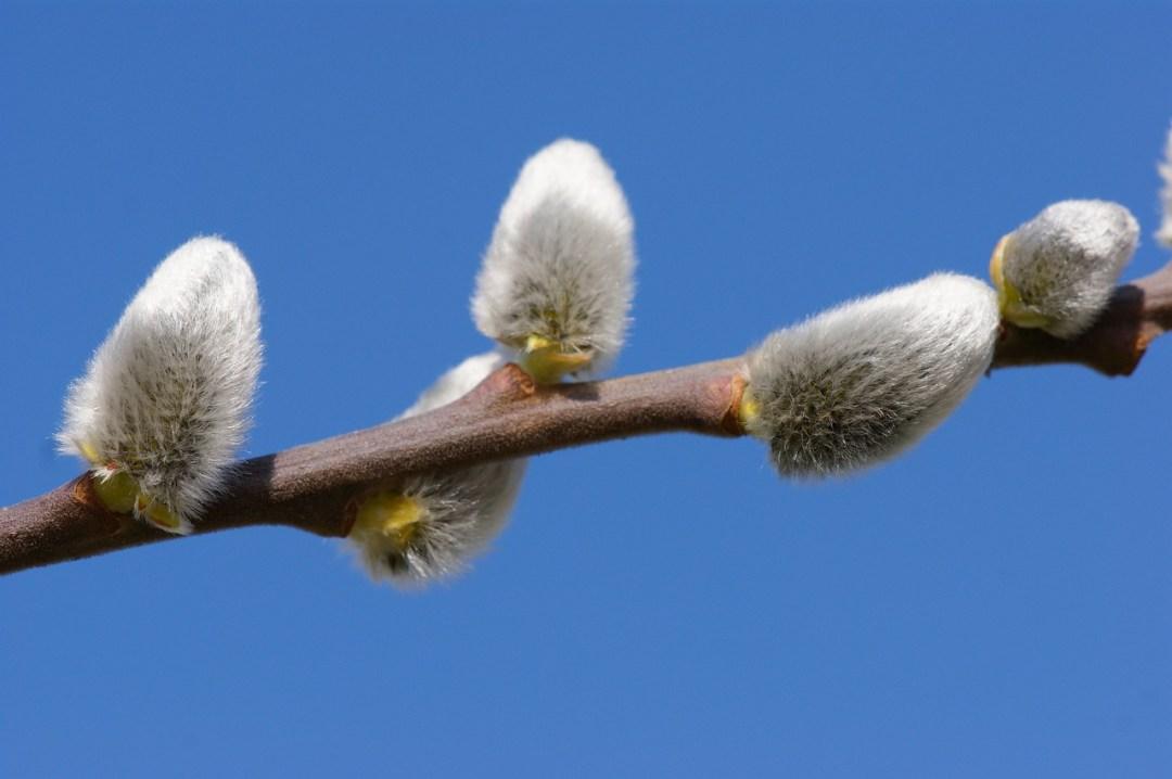 cercle de printemps