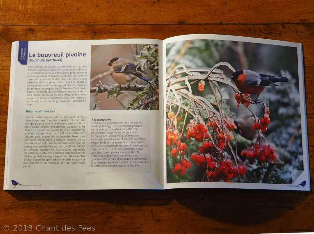 nourrir les oiseaux en hiver