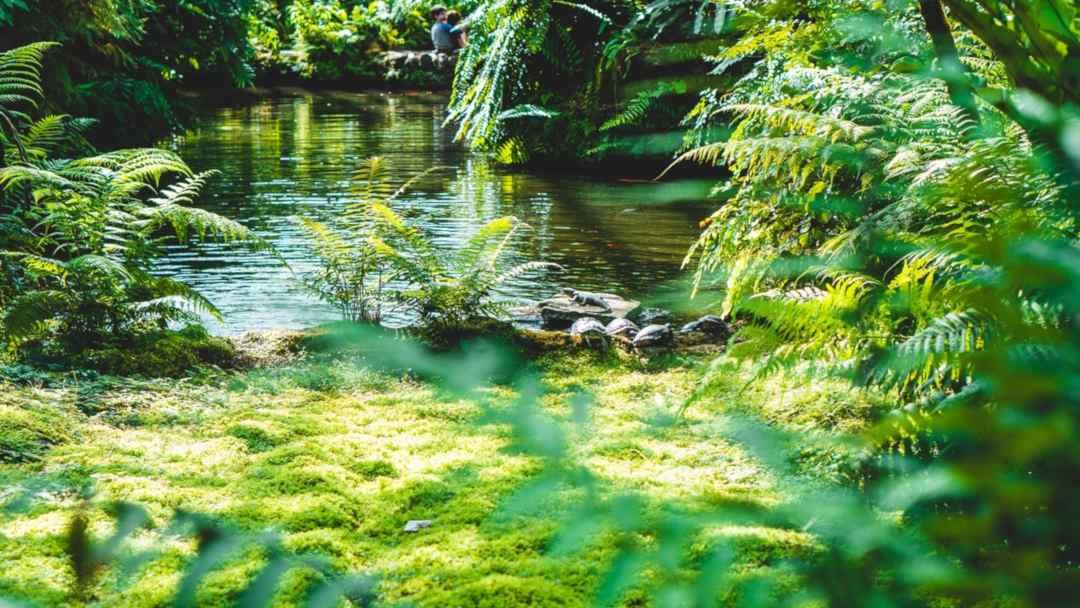 La rivière à l'envers