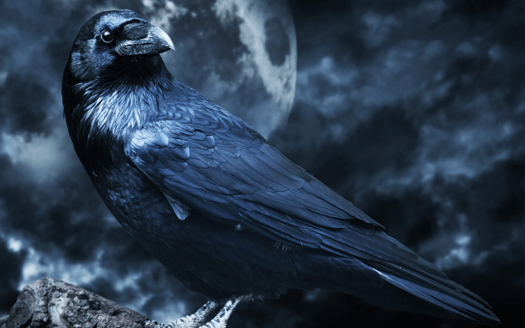 Shadow Work with Crow Guided Meditation