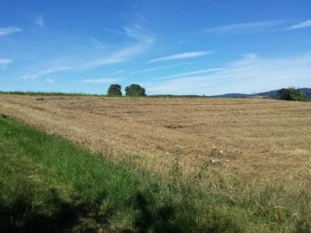 Die Felder hatten etwas für sich. Wie gemalt kommt die Landschaft daher.