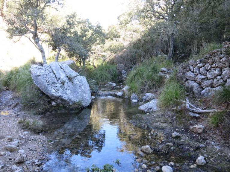 Märchenwald zur Es Prat-Quelle (GR221)