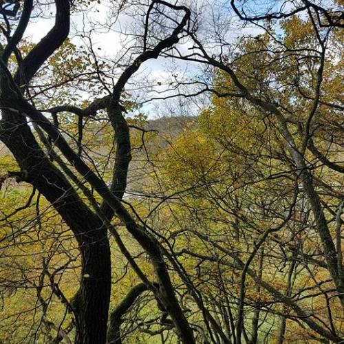 Seltsame Bäume hier...