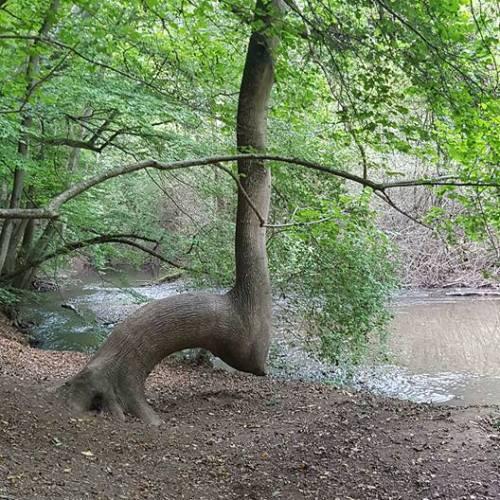 DER Baum ;)