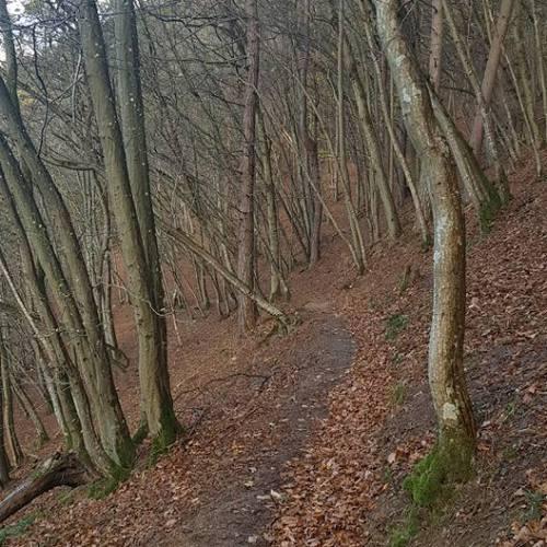 Schmale Pfade durch Wälder ohne Laub