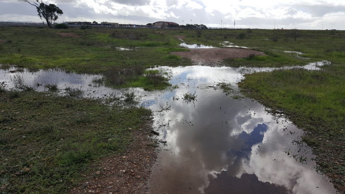 Request for Proposals – Otay Mesa Vernal Pool Habitat Restoration Project I