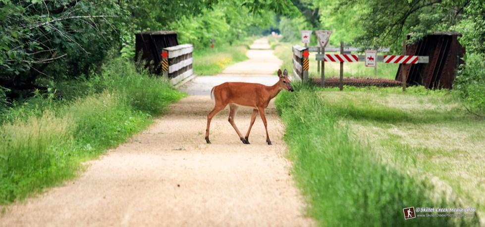 Deer on the 400 State Bike Trail