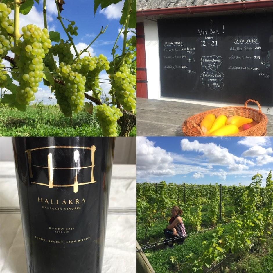 Skane Hallakra wine sweden