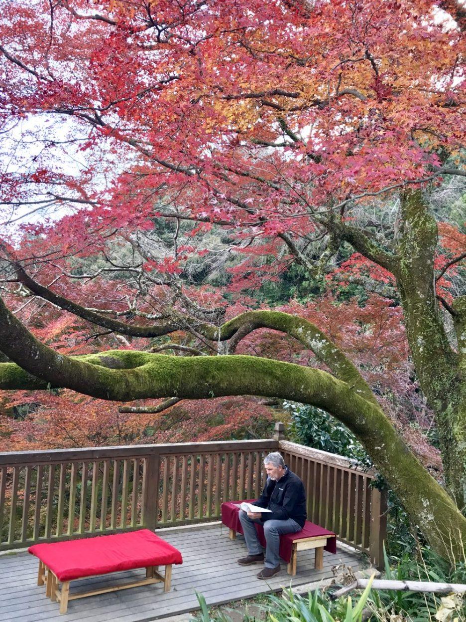 Kyoto daihikaku