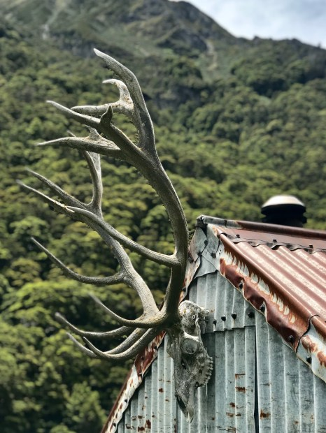new zealand minaret station antler