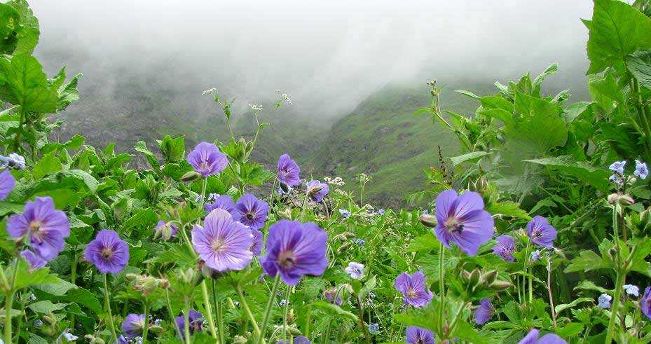 valley of flower during monsoon