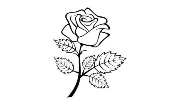 Coloring A Rose With Fragrance