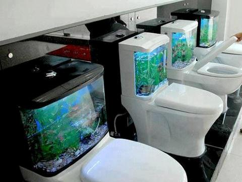 Fabulous Aquarium Placing On Toilet Tank
