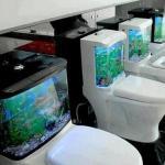 Fabulous Aquarium Placing On Toilet Tank