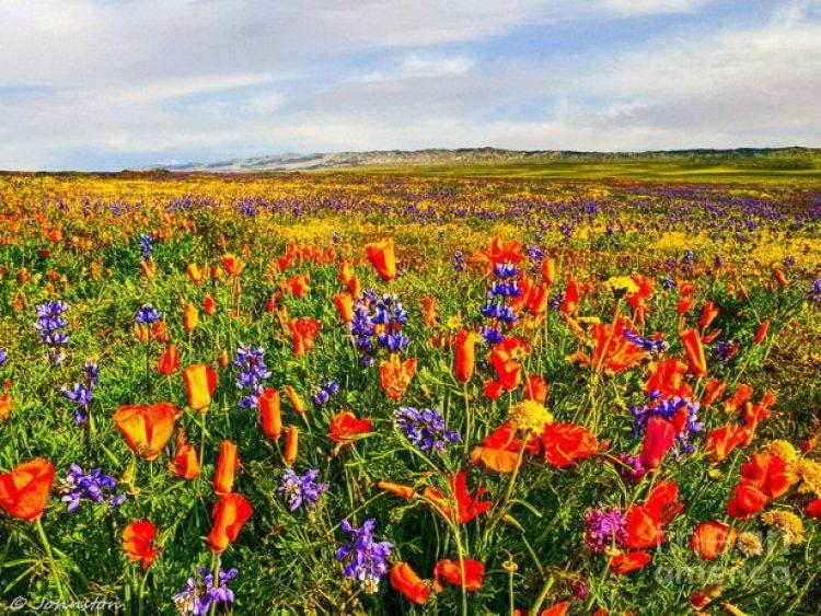 Antelope Valley Poppy Reserve in California12_exposure_resize