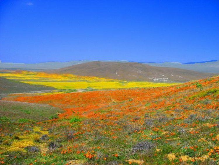Antelope Valley Poppy Reserve in California15_exposure_resize